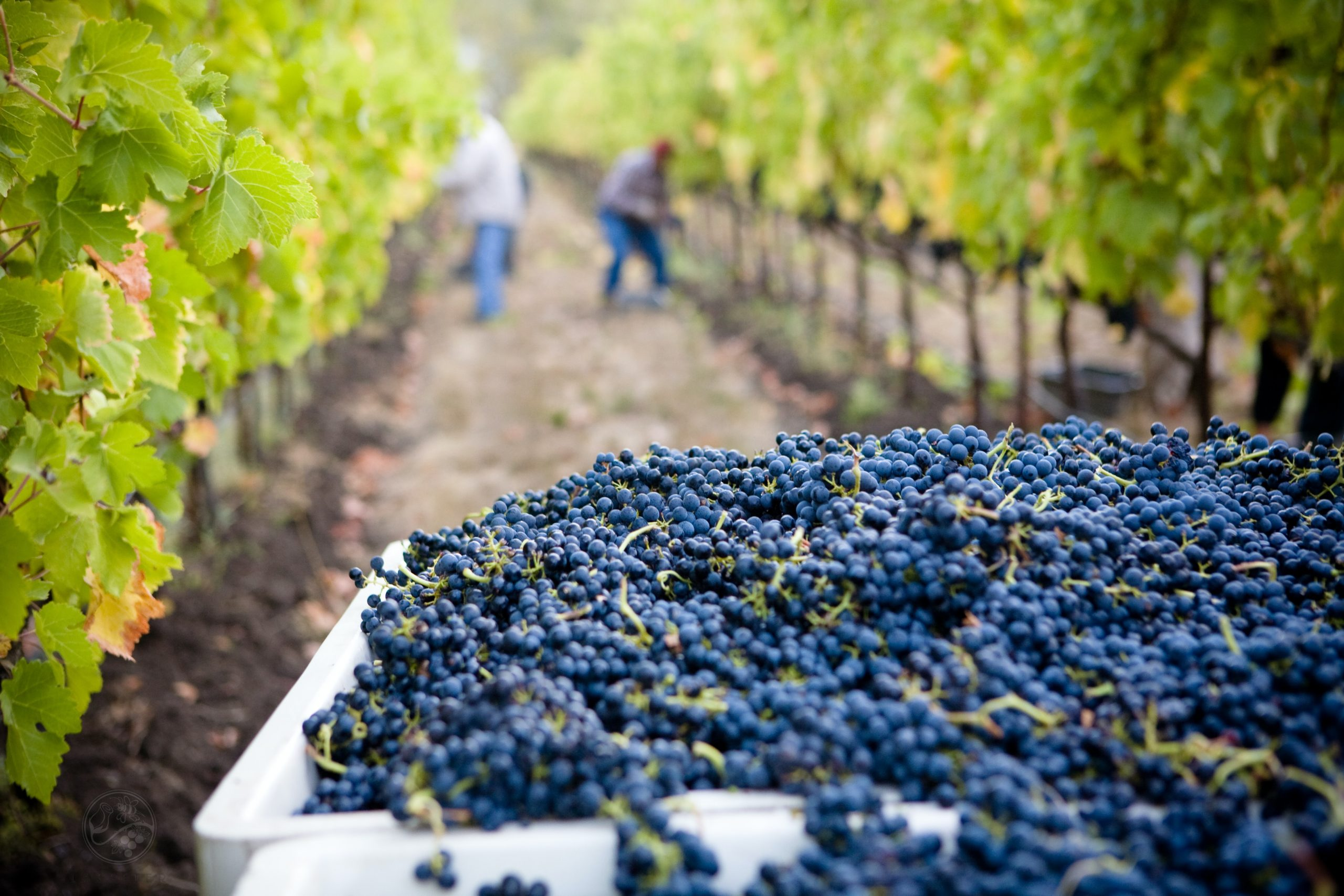 lasseter-winery-asG1QSDvb4g-unsplash